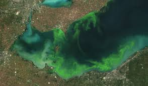 The view from above: Algae Blooms Gone Wild